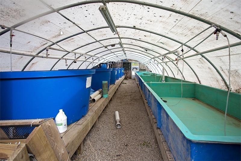 Fish Farming Websites
